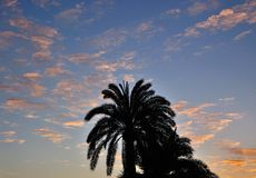 Silhouette of palm trees at dawn Stock Image