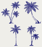 Silhouette of palm trees Stock Images