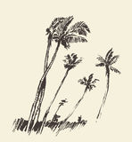 Silhouette of palm trees drawn vector sketch. Stock Images