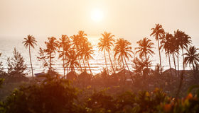 Silhouette of palm trees at Goa, India Royalty Free Stock Photo