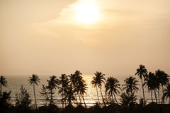 Silhouette of palm trees at Goa, India Stock Image