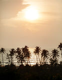 Silhouette of palm trees at Goa, India Stock Photography