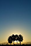 Silhouette of Palm Trees royalty free stock photography