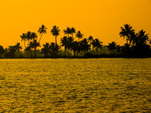 Silhouette of palm trees in India, Kerala Royalty Free Stock Image