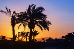 Silhouette of palm trees, mosque at sunset.  Stock Images
