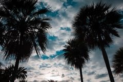 Silhouette of Palm trees. Near the beach On the day the sky have cloud was dense Royalty Free Stock Photo