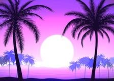 Palm trees on pink gradient tropical sunrise. Silhouette of palm trees on the pink gradient tropical sunrise, vector illustration Royalty Free Stock Image