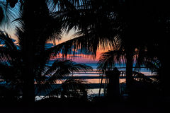Silhouette of palm trees and a pink sunset on island Stock Images