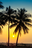 Silhouette of palm trees at the seashore Stock Photo