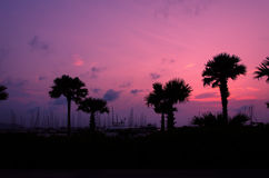 Silhouette palm trees Royalty Free Stock Photos