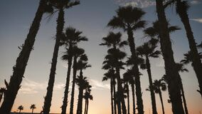 Silhouette palm trees in street at sunset. Summer tropical beach concept.