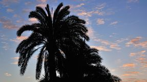 Silhouette of palm trees at sunrise Royalty Free Stock Photography