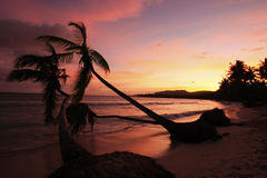 Silhouette of palm trees at sunrise, Las Galeras beach Royalty Free Stock Photography