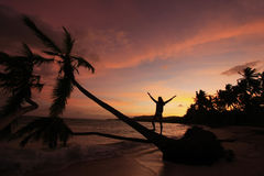 Silhouette of palm trees at sunrise, Las Galeras beach Stock Photos