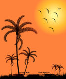 Silhouette palm trees at sunset Stock Image