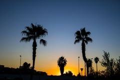 Silhouette of palm trees during the sunset with the blue sky. During the twilight Royalty Free Stock Photography