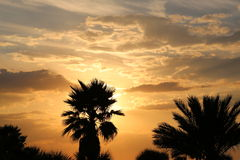 Silhouette of palm trees before sunset Royalty Free Stock Photography