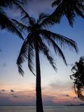 Silhouette of palm trees at sunset and multicolored clouds royalty free stock photo