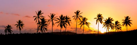 Silhouette of palm trees during sunset, Reunion Island. Saint-louis royalty free stock image
