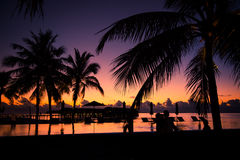 Silhouette of palm trees at sunset, vintage filter Stock Photography