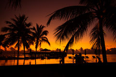 Silhouette of palm trees at sunset, vintage filter Royalty Free Stock Photography