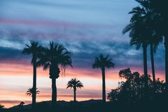 Silhouette of Palm Trees Under Dark Clouds during Orange Sunset Royalty Free Stock Photography
