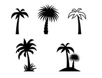 Silhouette of Palm Trees. Stock Photography