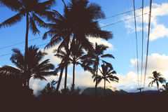 Silhouette of Palm Tress Royalty Free Stock Images