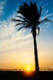 Silhouette of palms Stock Photo