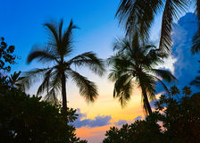 Silhouette of palms and sunset Stock Photos