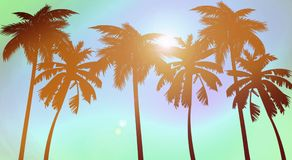 Silhouette of palms, on a sunset background royalty free illustration