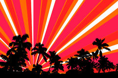 Silhouette palms trees with vector sun rays. Black silhouette palm trees set against an orange, pink, and white vector sun rays Royalty Free Stock Image