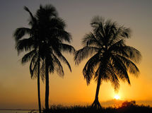 Silhouette palmtree Royalty Free Stock Images