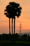 Silhouette of palmyra tree and high voltage tower, Mekong Delta Stock Photos
