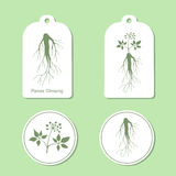 Silhouette of panax ginseng with leaves and root. Vector  Illustration. Health and Nature Set of Tags and Labels Stock Photo