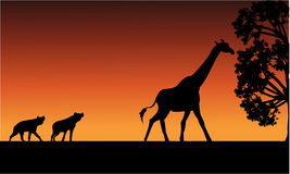 Silhouette of panther and giraffe Royalty Free Stock Photos