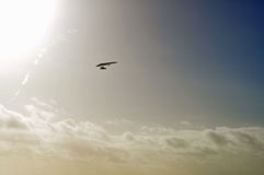 Silhouette of paraglider in air. Paragliding silhouette high in the sky royalty free stock image