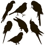 Silhouette of a parrot many individuals. Isolated Royalty Free Stock Photography