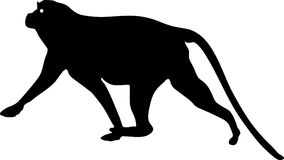 Silhouette of Patas monkey Stock Photos