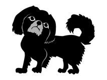 Silhouette of Pekingese. Series with pets Royalty Free Stock Photography