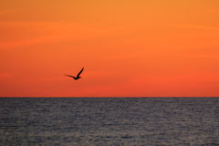 SIlhouette of a Pelican at Sunset Stock Photo