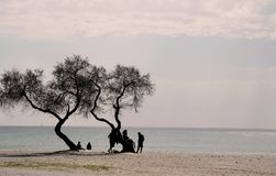 Silhouette of people chatting under tree on beach in the sunset Royalty Free Stock Images