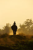 Silhouette of people ride elephant on path Stock Image