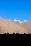 The silhouette of people riding a camel in the desert. With magnificent mountain views in Ladakh, Leh, India Royalty Free Stock Photos