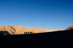 The silhouette of people riding a camel in the desert. With magnificent mountain views in Ladakh, Leh, India Royalty Free Stock Photo