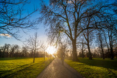 Silhouette of people walking towards sunset at a park Royalty Free Stock Images