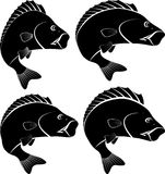 Fish. Silhouette of perch fish - vector illustration Royalty Free Stock Images