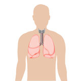 Silhouette Of Person With Lungs Royalty Free Stock Photos