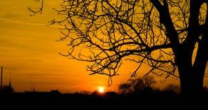 Silhouette Photo of Bare Tree Royalty Free Stock Photos