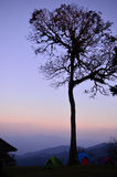 Silhouette photo of big tree. When sunrise Royalty Free Stock Photos